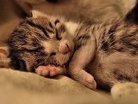 朝まで熟睡する方法