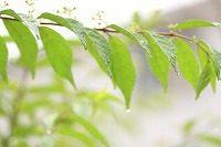 梅雨空を時候の挨拶に使う場合の使い方は?